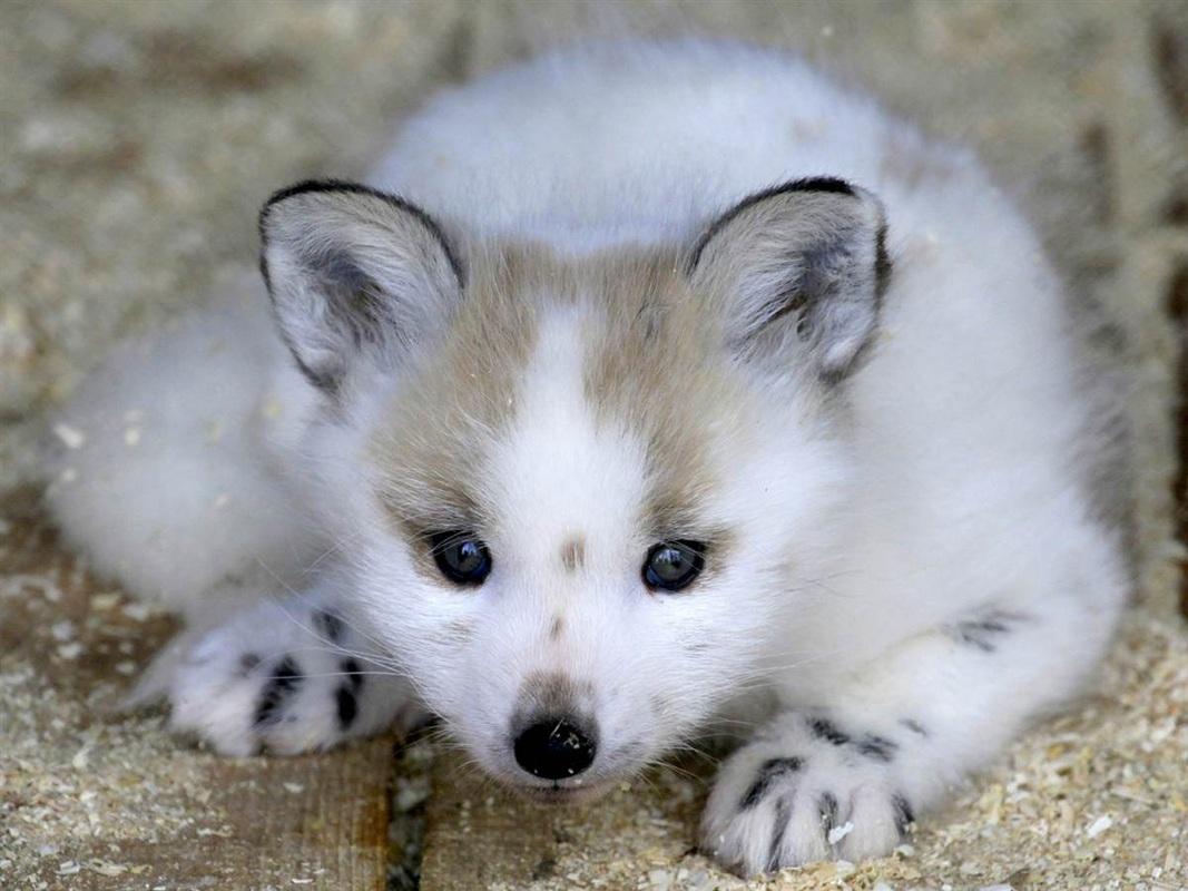 Лучшие фотографии животных - Обо всём на свете - Форум Дети Mail.Ru